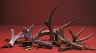 Antlers, Central Altiplano, Formative